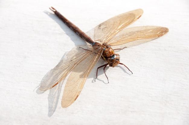 Eine schöne libelle, die sich in der sonne aalt.