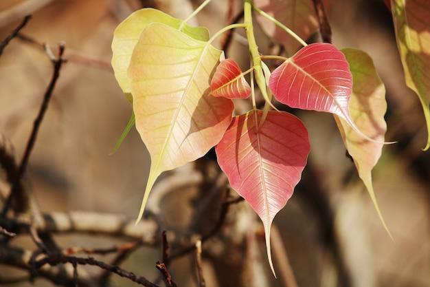 Eine schöne nahaufnahme von banyanbaumblättern