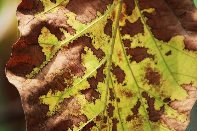 Eine schöne nahaufnahme von wilden baumblättern