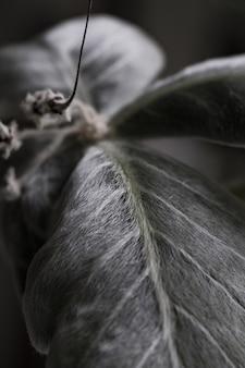 Eine schöne pflanzennahaufnahme