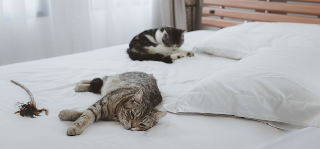 Eine schöne und süße ingwerkatze schläft auf weißem bett