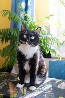 Eine schwarz-weiße katze, die auf einem bügelbrett in der nähe von sonnenbeschienenen grünen hauspflanzen sitzt. gemütliches echtes zuhause mit haustier und vielen grünen zimmerpflanzen. vertikale ausrichtung.