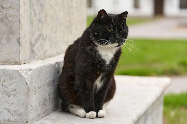 Eine schwarze flauschige katze sitzt an einem sommertag auf einem granitsockel