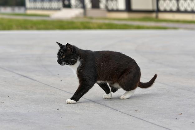 Eine schwarze katze ohne hinterpfote geht die straße entlang. porträt einer flauschigen schwarzen katze behindert