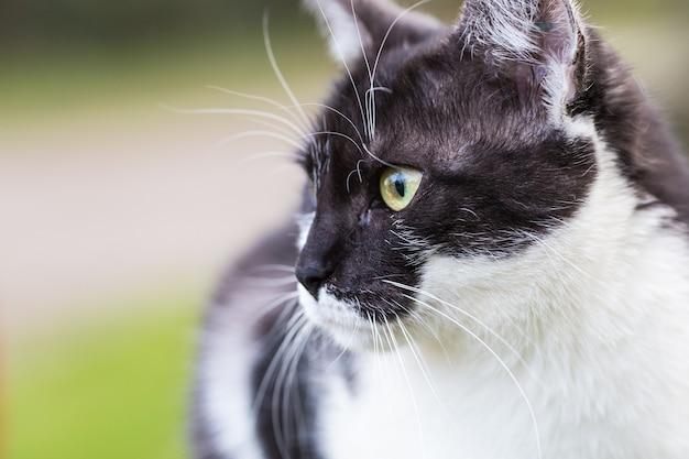Eine schwarzweiss-katze im weichzeichner, die im park sitzt