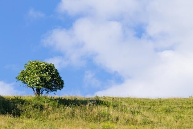 Eine sommerlandschaft mit einem isolierten baum über einem blauen himmel. italienische alpen