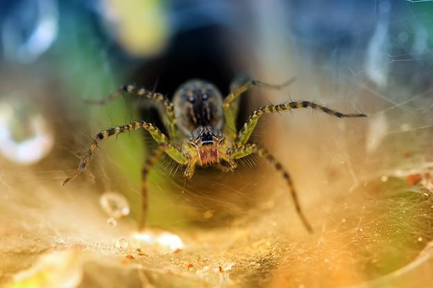 Eine spinne auf einem spinnennetz mit tröpfchen