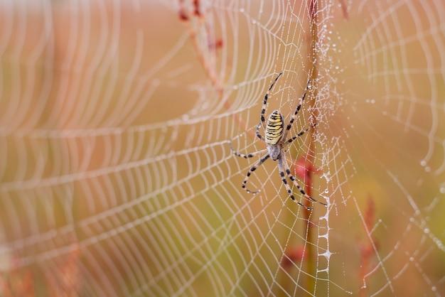 Eine spinne auf ihrem spinnennetz