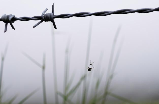 Eine spinne jagt eine fliege aus einem stacheldraht.