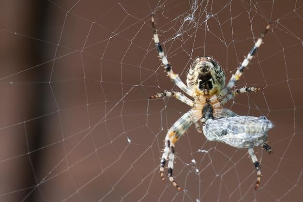 Eine spinne mit ihrer beute