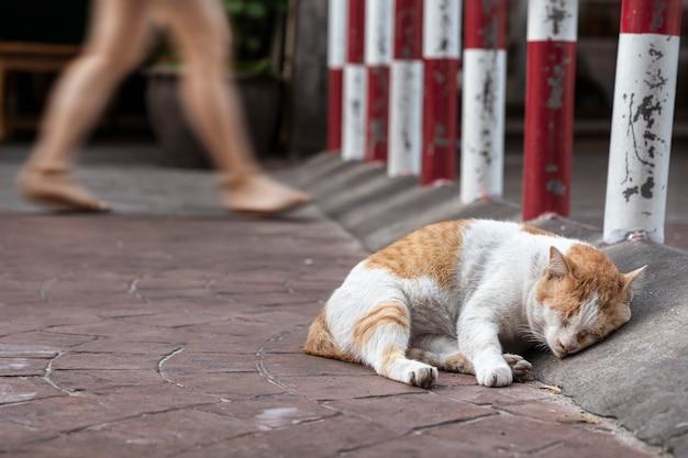 Eine straßenkatze schläft entspannt auf dem bürgersteig. leute gehen vorbei, er achtet nicht auf sie