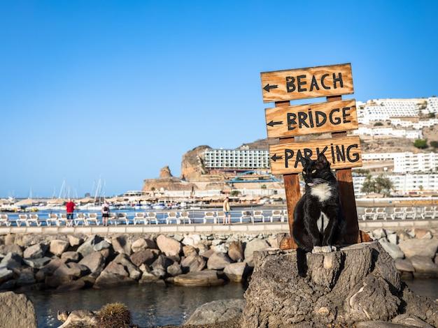 Eine streunende katze, die auf einem baumstumpf vor einem zeichen aufwirft, das auf den strand in puerto rico, gran canaria in spanien zeigt
