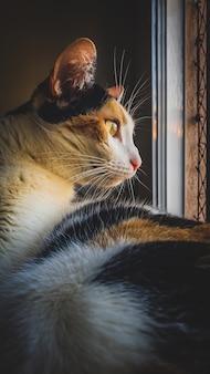 Eine streunende katze, die aus ihrem hausfenster-sicherheitszaun bei sonnenuntergangslicht schaut. selektiver fokus
