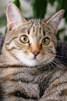 Eine streunende katze, die von menschen beschützt wird. haustier.