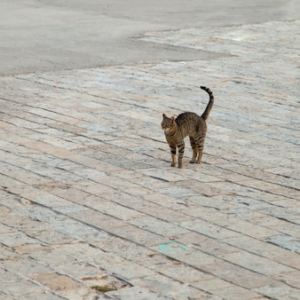Eine streunende katze geht auf der straße ihren geschäften nach.