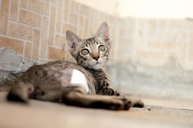 Eine streunende katze wurde von einem hund gebissen