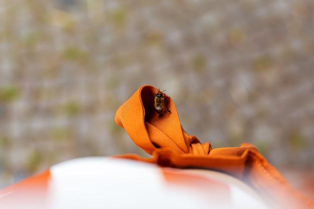 Eine süße biene reist am gürtel eines mädchens
