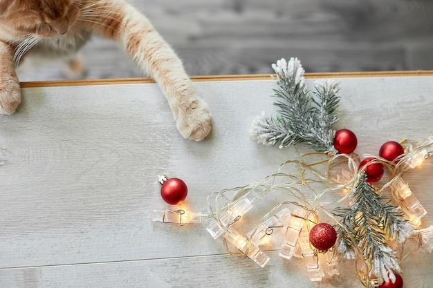Eine süße entzückende britische katze, die zu hause mit weihnachtskugeln spielt, pfote auf dem tisch mit weihnachtsschmuck, weihnachtskatze, neujahr, draufsicht, kopierraum.
