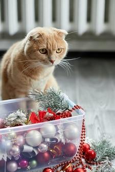 Eine süße entzückende britische katze, die zu hause mit weihnachtskugeln spielt, weihnachtsschmuck, weihnachtskatze, neujahr