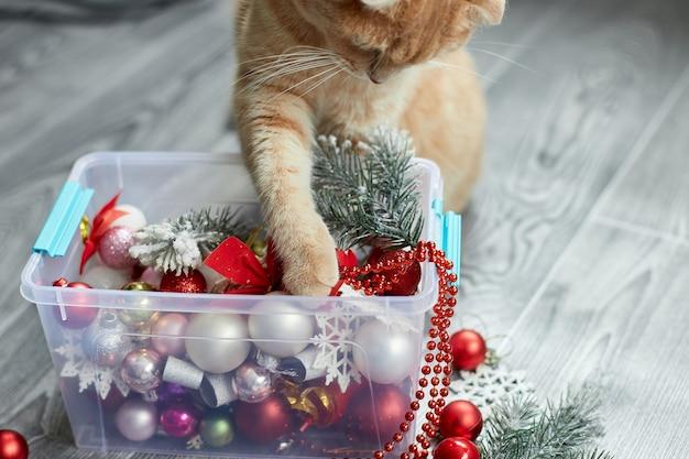 Eine süße entzückende britische katze, die zu hause mit weihnachtskugeln spielt weihnachtsschmuck weihnachtskatze