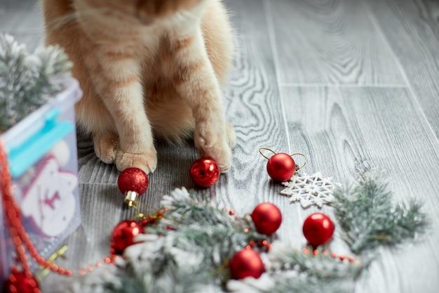 Eine süße entzückende britische katze, die zu hause mit weihnachtskugeln spielt, weihnachtsschmuck, weihnachtskatze