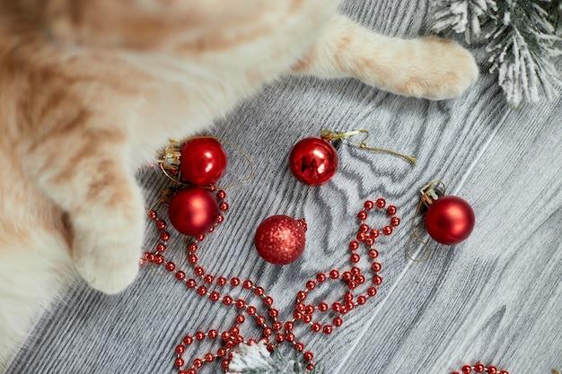 Eine süße entzückende britische katzenpfote, die zu hause mit weihnachtskugeln spielt, weihnachtsschmuck, weihnachtskatze
