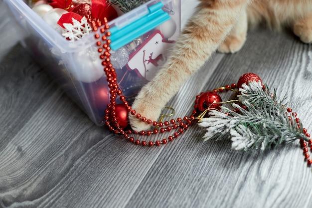 Eine süße entzückende britische katzenpfote, die zu hause mit weihnachtskugeln spielt weihnachtsschmuck