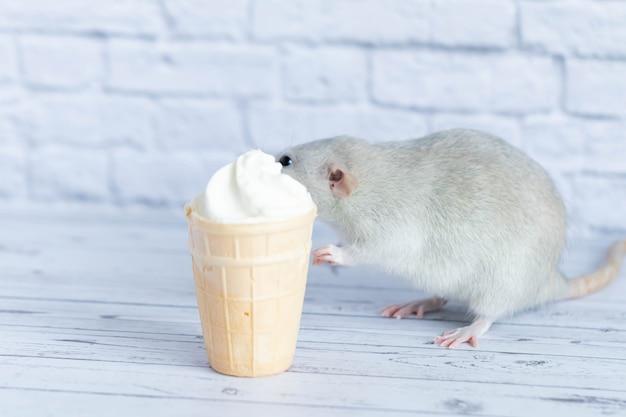 Eine süße ratte sitzt neben einem waffelbecher mit weißem eis. das nagetier schnuppert das dessert. nahaufnahmeportrait von tieren. makro.