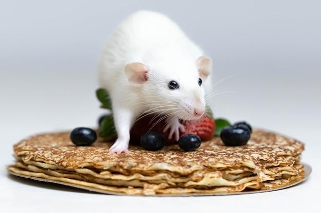 Eine süße weiße dekorative ratte sitzt auf köstlichen pfannkuchen mit erdbeeren und blaubeeren.