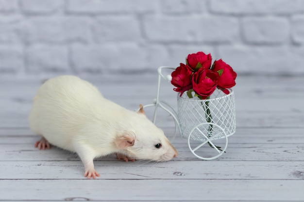Eine süße weiße kleine ratte sitzt neben einem strauß roter blumen. blumen sind in einem weißen fahrradspielzeugkorb angeordnet.