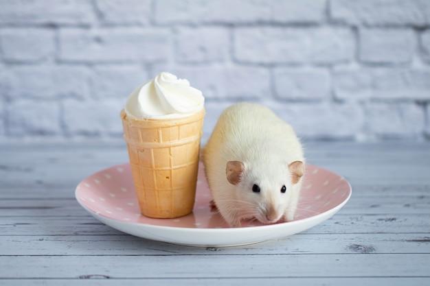 Eine süße weiße ratte sitzt neben einem waffelbecher mit weißem eis. das nagetier schnuppert das dessert.
