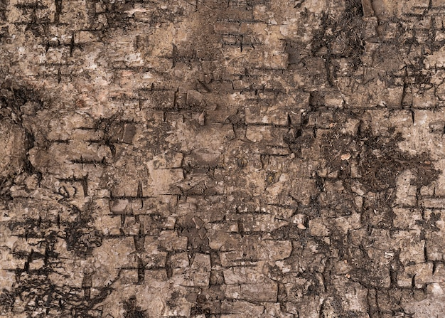 Eine textur der braunen baumrinde schließen oben für design