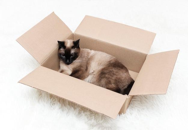 Eine thailändische katze mit blauen augen ist in einer box.