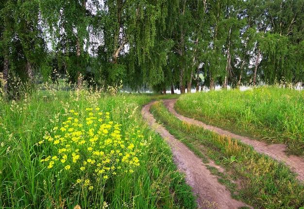 Eine unbefestigte straße zwischen dichtem gras und wildblumen am morgen auf dem hintergrund eines waldes