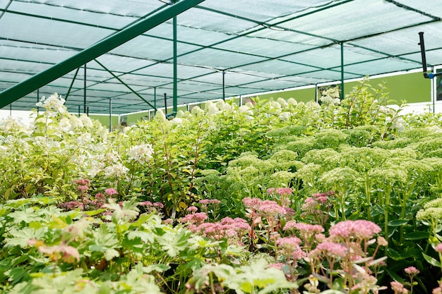 Eine vielzahl von blumen und grünpflanzen vieler arten und farben, die in einem großen zeitgenössischen gewächshaus zusammenwachsen, ohne dass jemand in der nähe ist