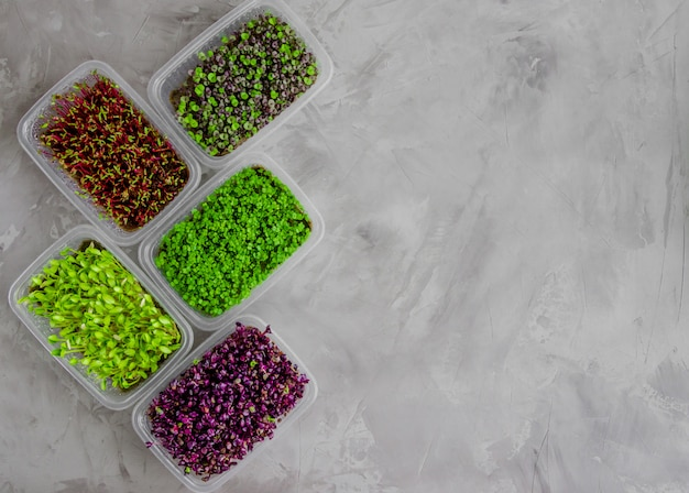 Eine vielzahl von mikrogrüns aus radieschen-rote-bete-basilikum-rucola und gurke
