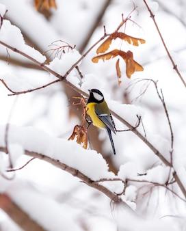 Eine vogelmeise sitzt im winter auf einem schneebedeckten ahornzweig