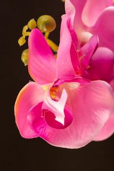 Eine vorderansicht rosa blume schöne lebendige naturblumenfarbe