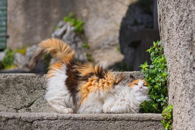 Eine weibliche katze auf der treppe