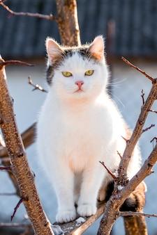 Eine weiße katze sitzt auf einem baum bei sonnigem wetter