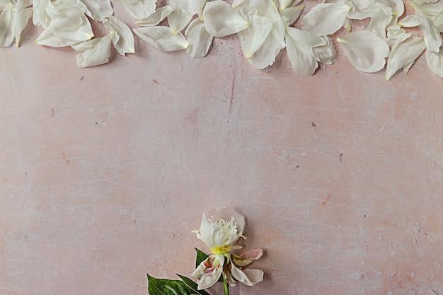 Eine weiße verwelkte pfingstrose mit grünen blättern und blütenblättern, die wie regentropfen auf rosafarbenen beton fallen