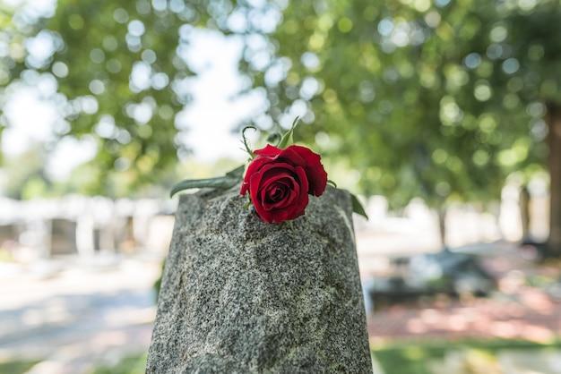 Eine wilde rose auf dem grabstein