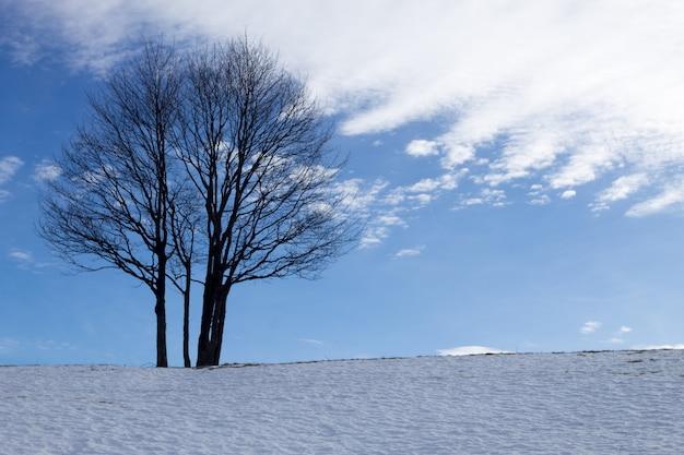Eine winterlandschaft mit einem isolierten baum über einem blauen himmel