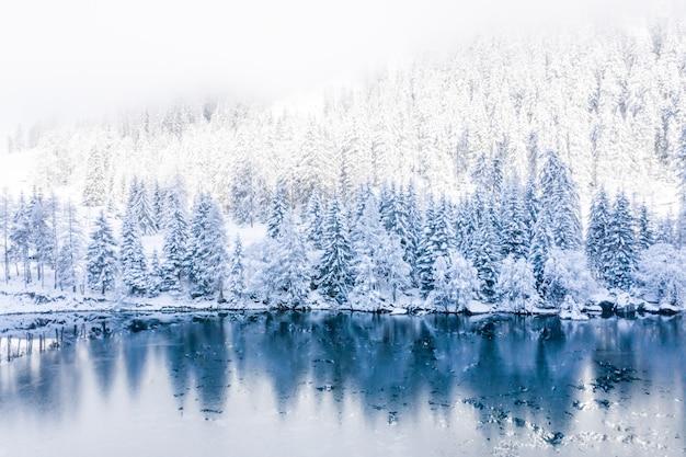 Eine winterlandschaft mit einem see umgeben von schneebedeckten bäumen am frühen morgen