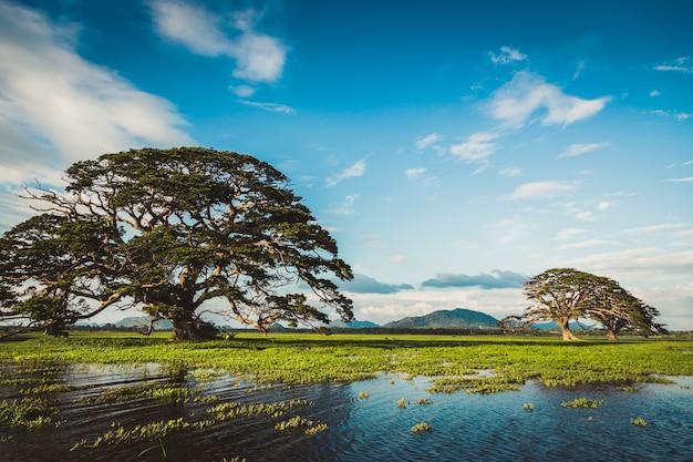 Eine wunderschöne landschaft mit einem see, einem baum und bergen. waldsee unter blauem bewölktem himmel