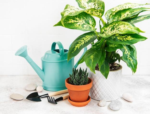 Eine zimmerpflanze in blumentöpfen und grüne gießkanne auf dem tisch