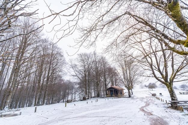 Eine zuflucht zwischen bäumen beim aufstieg zum berg aizkorri in gipuzkoa. schneelandschaft im winter schneit