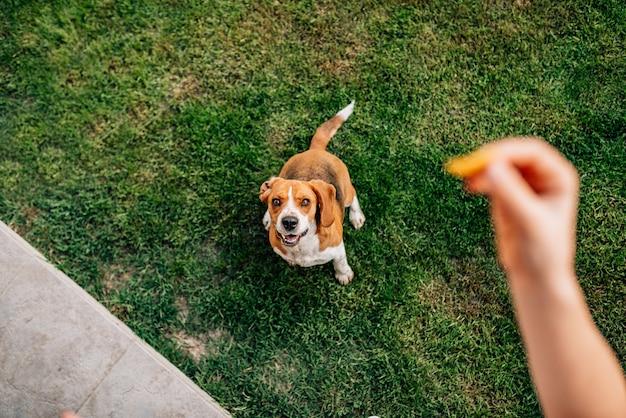 Einem hund einen leckerbissen geben. aussichtspunkt.