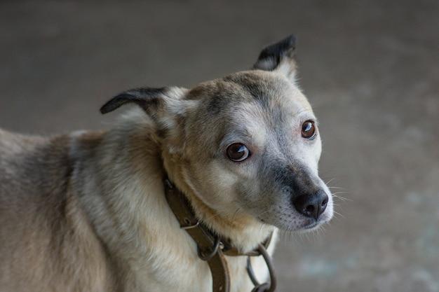 Einen hund adoptieren. obdach für obdachlose hunde.