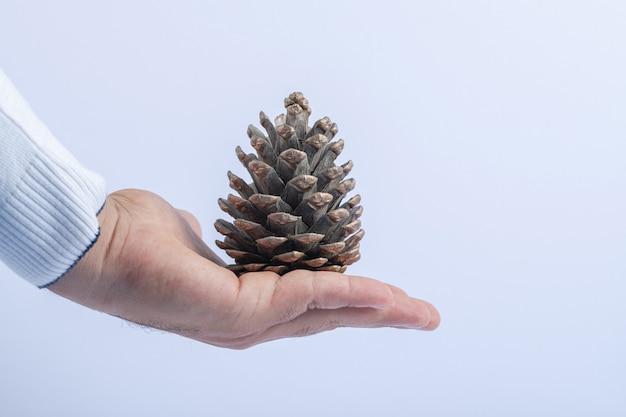 Einen natürlichen eichenzapfen in der hand halten